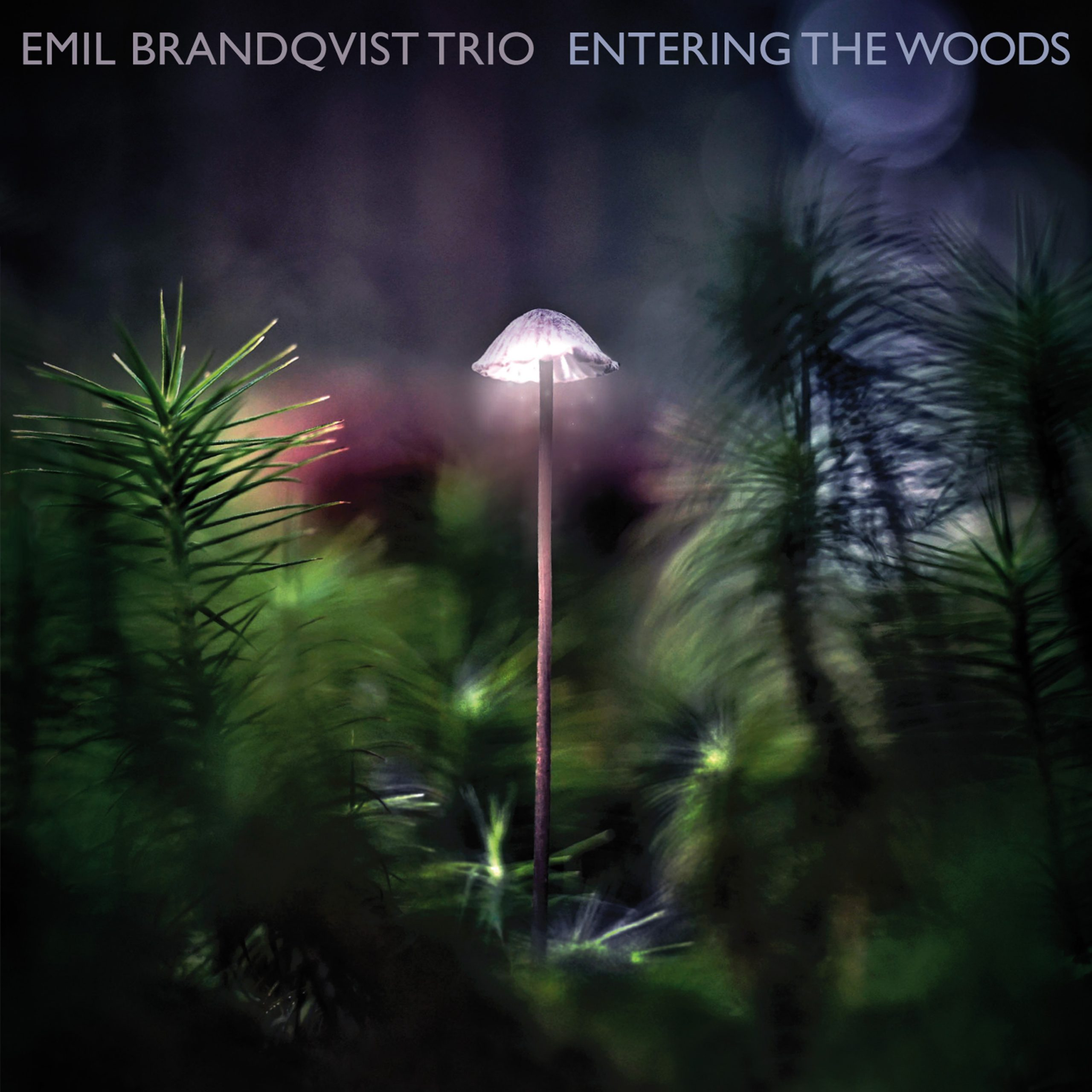 Click and discover Emil Brandqvist Trio's latest release Entering the Woods
